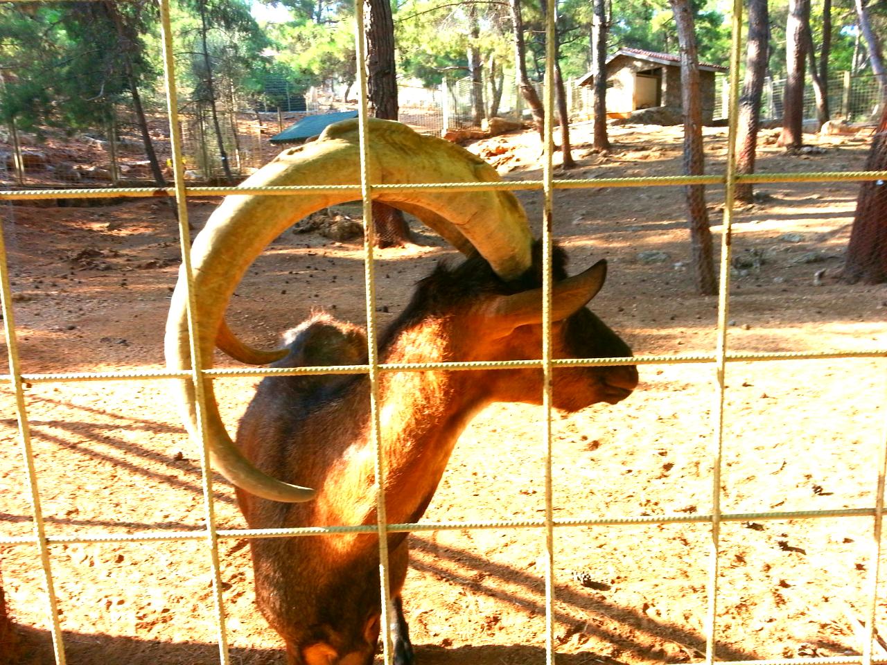 Antalya City Blog Visited Antalya Zoo and Nature Park ...