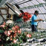 Fabricación de invernaderos