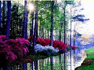 rio con flores de colores del otoño