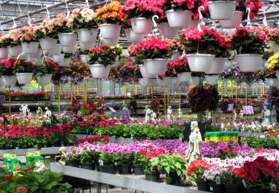 Meredith 39 S Garden Blog My Garden Centre Picks Stores With Garden Sections