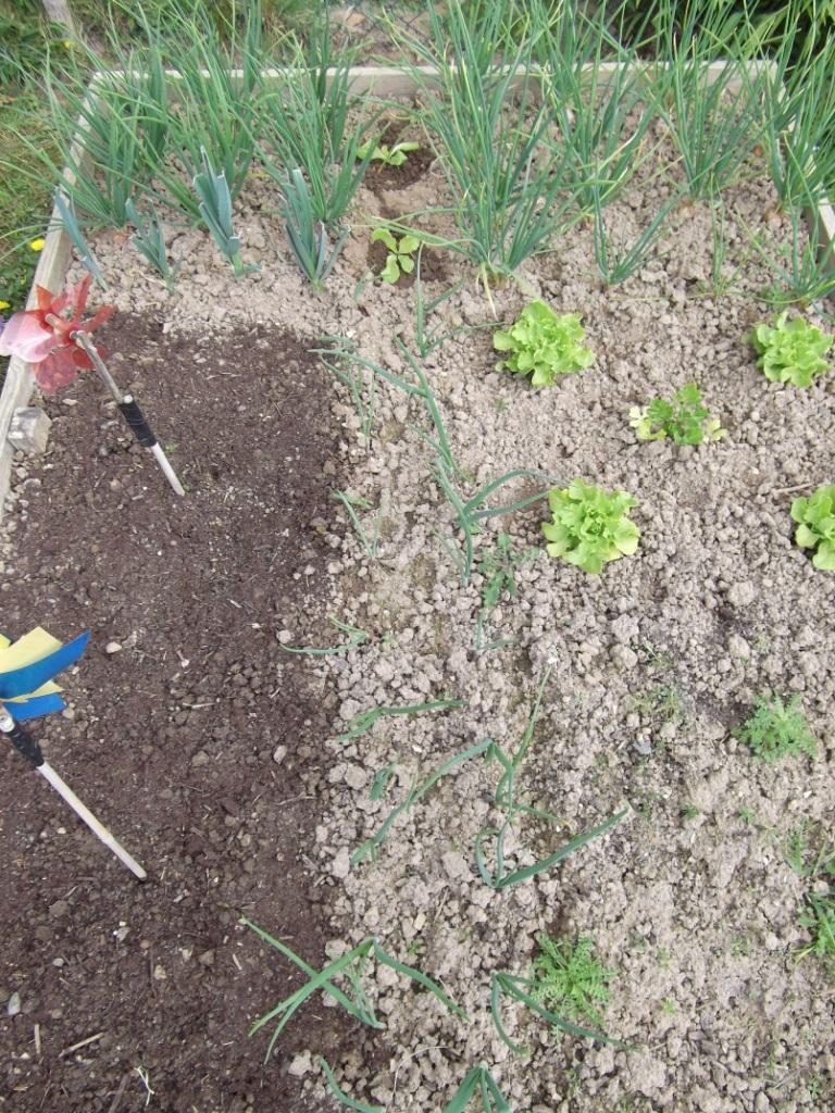 Le jardin du vent la r v rence du petit pois - Comment cuire les petit pois du jardin ...