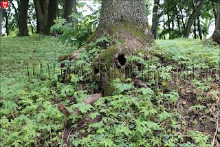 Несколько дупел в одном дереве