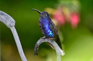 Hummingbird, nouvel algorithme de Google