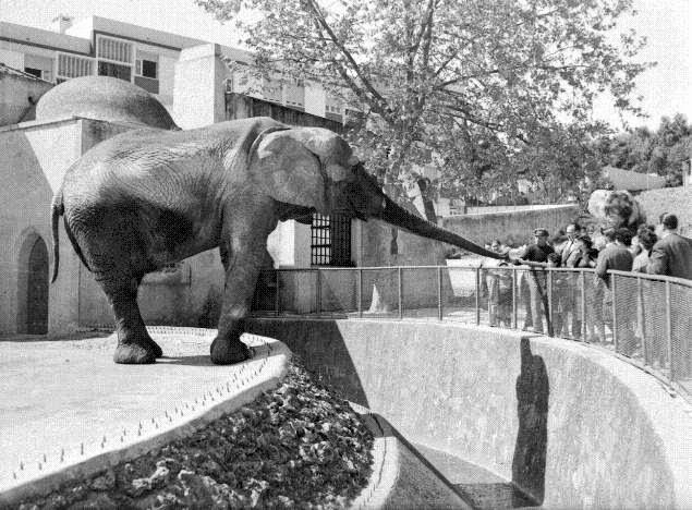 ... de dar moeda ao elefante no zoo