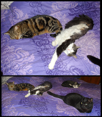 Anakin Two Legged Cat, Trixie, Pixie, George, Lazy Caturday