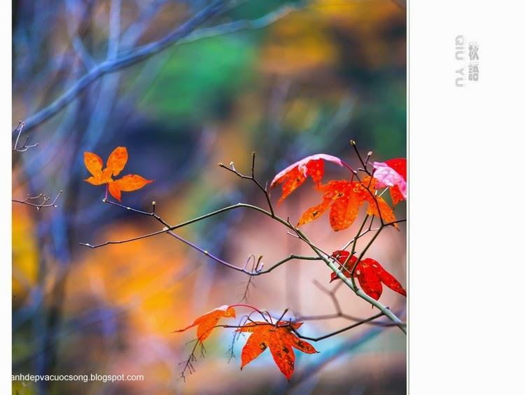 Chiếc lá mùa thu 4