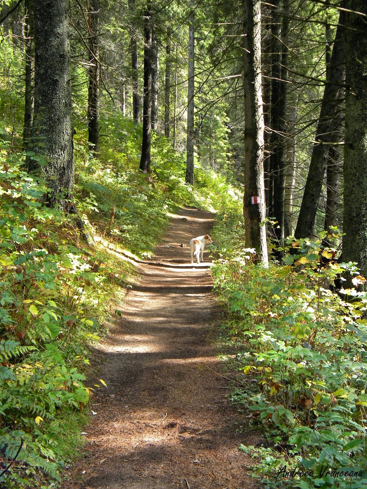 cățel, pădure, verde