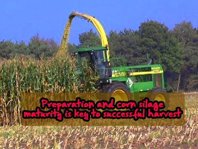 Preparation and corn silage maturity is key to successful harvest