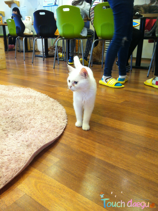 Kittens in Go Yang-E cafe