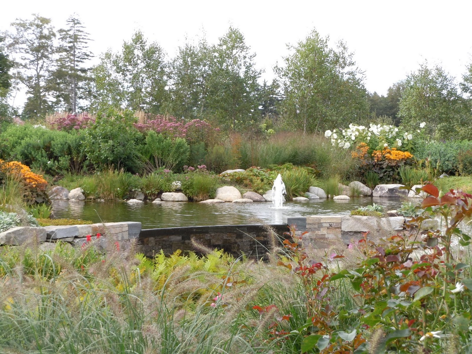 Flowers From My Area Coastal Maine Botanical Gardens 3