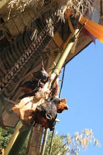 torajanculture.blogspot.com