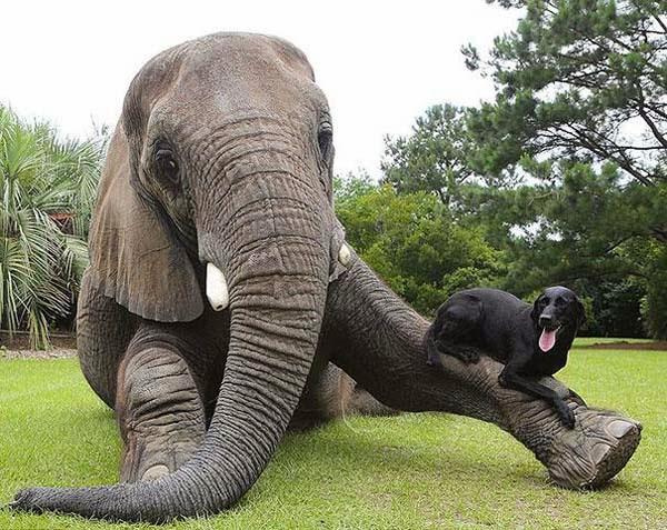 5 incredibili storie di amicizia tra animali di razze diverse