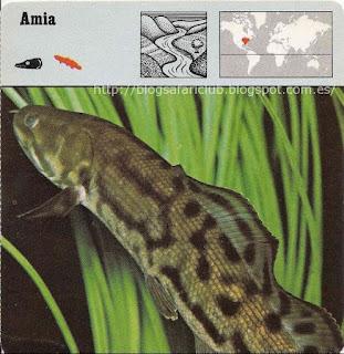 Blog Safari club, el Amia
