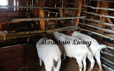 horn friendly hay manger feeder for goats sheep