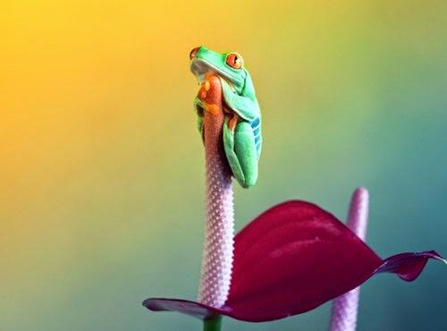 06-Wil-Mijer-Frog-Macro-Photography-www-designstack-co