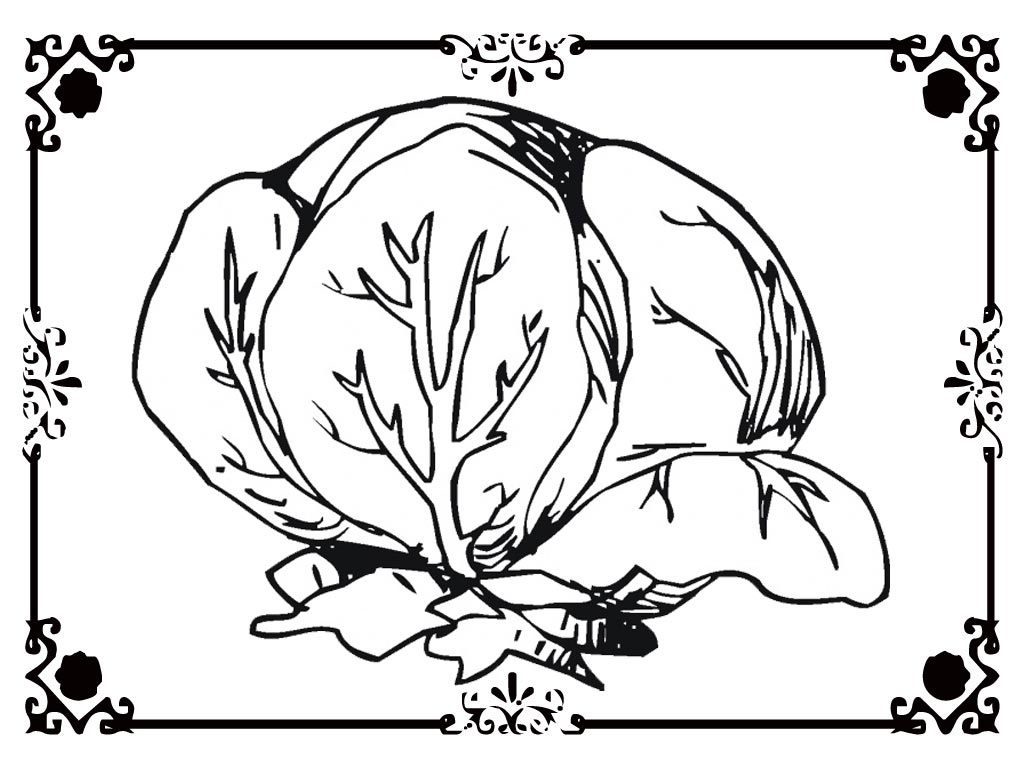 Lettuce coloring pages