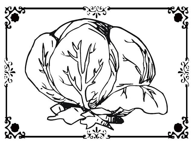 lettuce coloring pictures