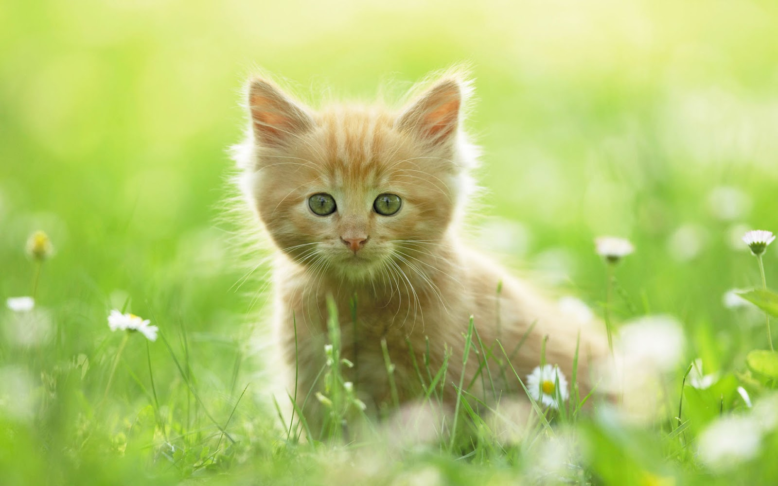 It's HD | Animals-Funny-Wallpapers: cute kittens and ...