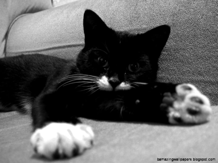 Image   Ella kitten photos cat photos gallery black and white