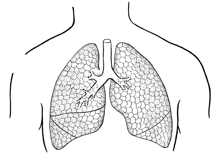 coloring pages of lung cancer - photo#12