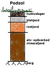 Podsoljord