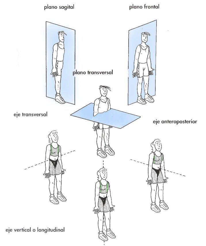 Anatomía al Instante: Posición anatómica, planos y ejes de orientación.