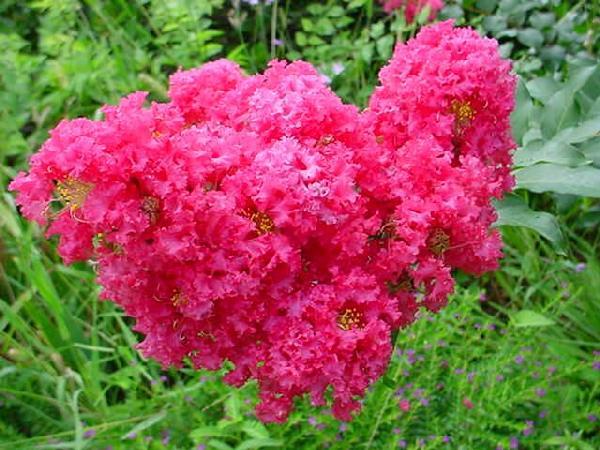 related recipes ambrosia ambrosia sauce summer ambrosia