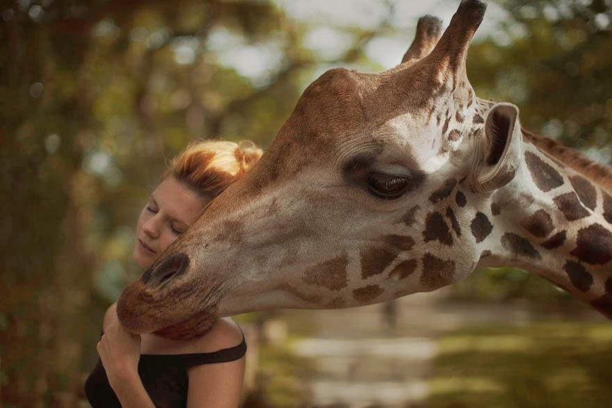 katerina plotnikova sesion de fotos con jirafa