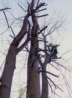 Pozwolenie na wycięcie drzew, Wycinka i przycinanie drzew, alpinistycznie, wzór wniosku, bezpieczna, profesjonalna, Katowice, koronowanie, Wrocław, ustawa o ochronie przyrody, 2004, Michał Trybus, 515 157 916,