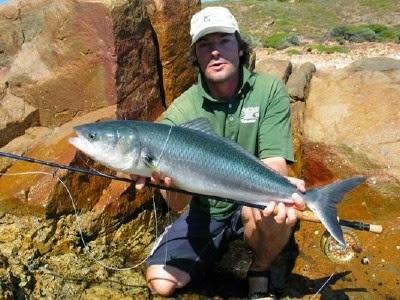 Australian Salmon Kahawai