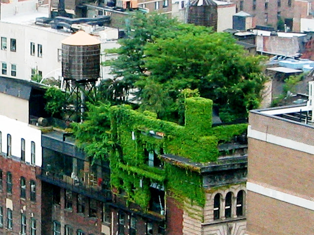 Cubierta vegetal masiva en Nueva York
