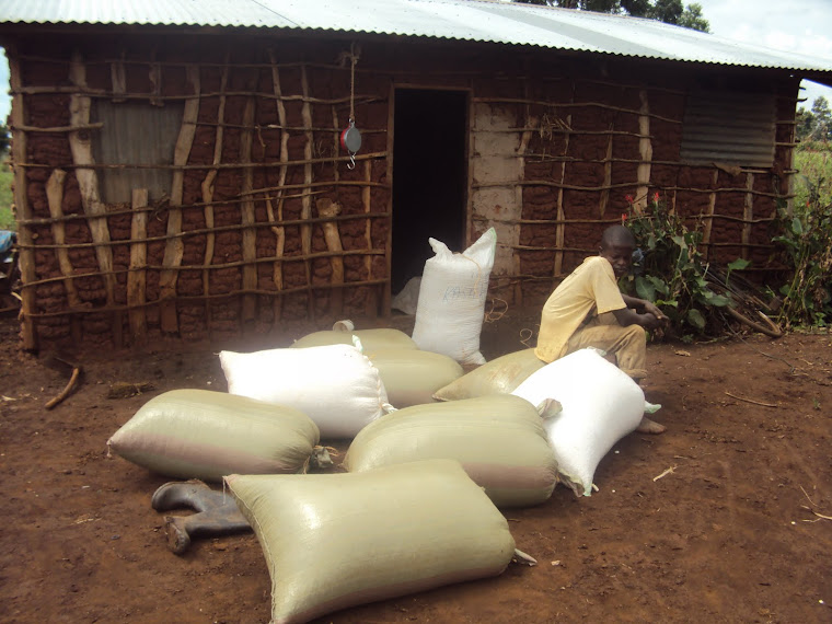 Maize bags