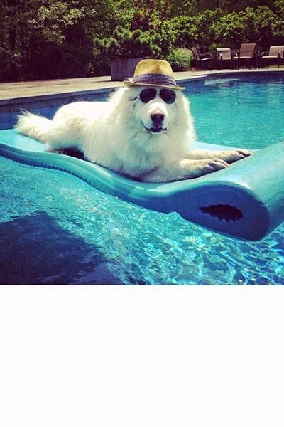 That is just like my dog jest chiling by the pool