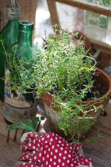 I mitt växthus