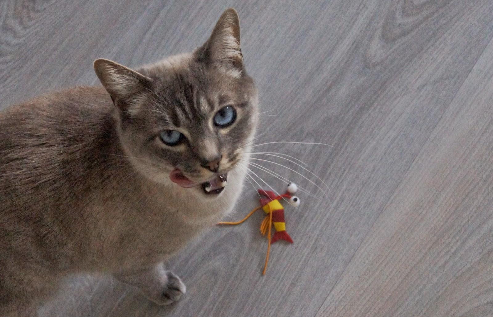 chat se lèche les babines