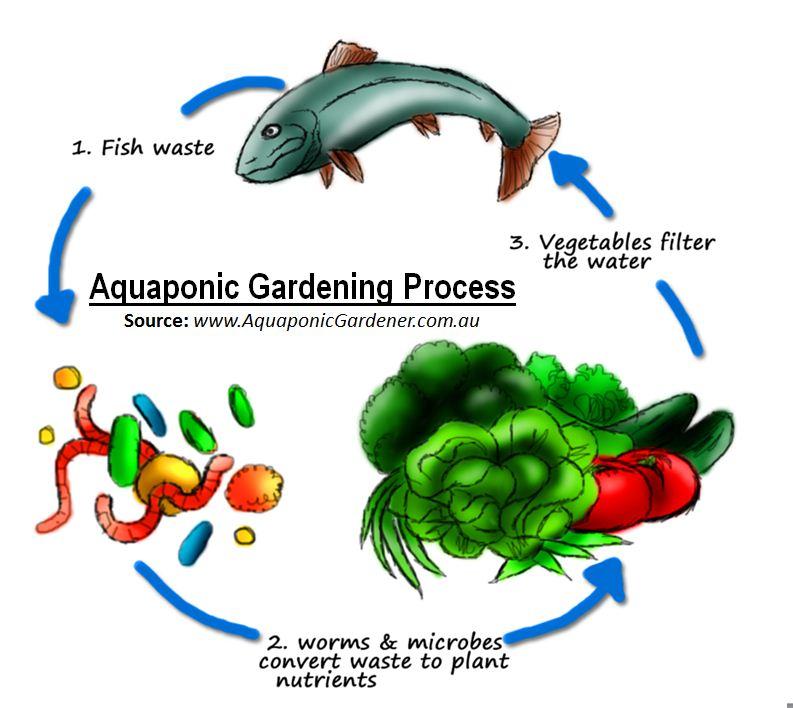 Michigan medical marijuana report grow tip aquaponics for Fish and plants in aquaponics