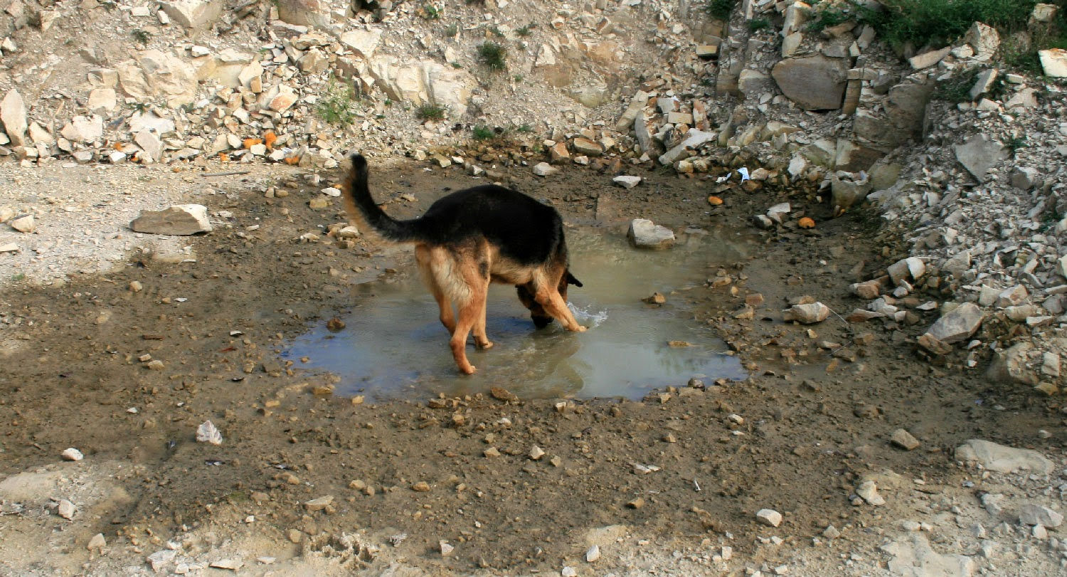 There isn't much water left in Rambo's pond
