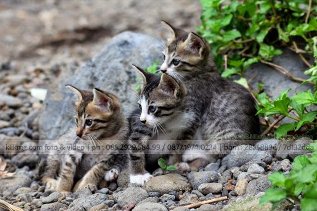 3 Trio Bugil yang Cantik & Imut. Maaf posting ini khusus Anda yang gemar foto perempuan bugil. - Foto oleh KLIKMG Fotografer Indonesia