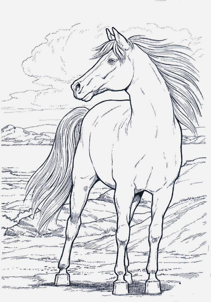 Disegni da colorare cavallo for Disegno cavallo per bambini