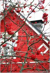 Punainen Pikkutalo = Koti ♥