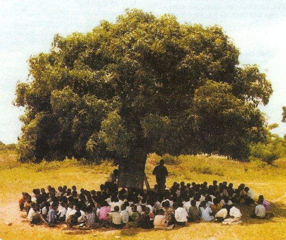 Le haut parleur janvier 2013 - Arbre africain en 7 lettres ...