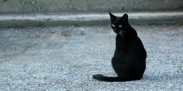 Mitos Dan Fakta Unik Menarik Seputar Kucing Hitam