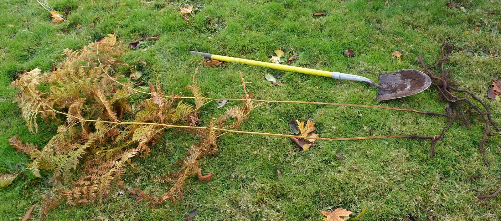 Fern Rhizome Wild Harvests: ...