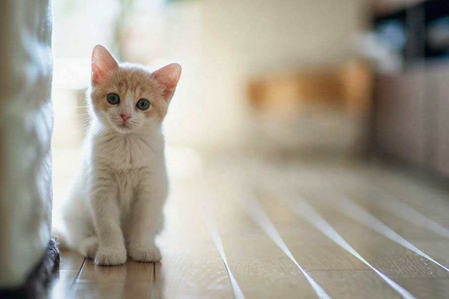 cat-lovely-kitten-baby
