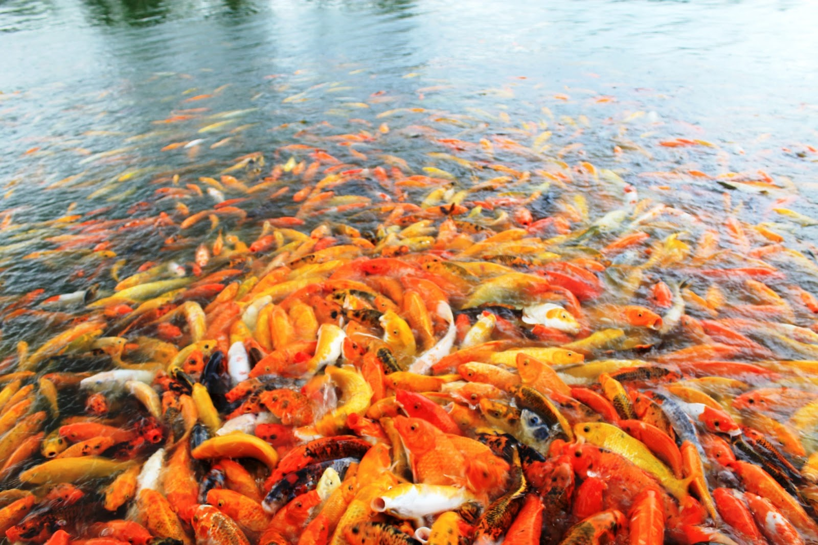 """This is the living proof of the aphorism """"there's so many fish in the ..."""