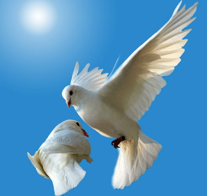 Free Cool Wallpapers Dove Wallpapers