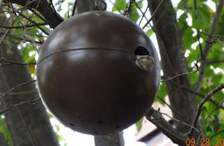 tree frog in wren house