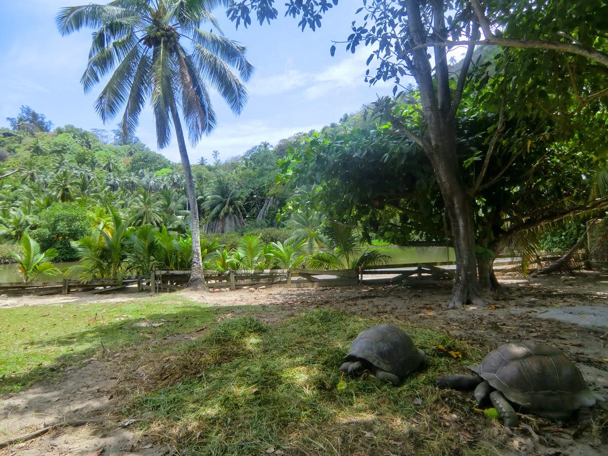 Черепахи-Сейшел