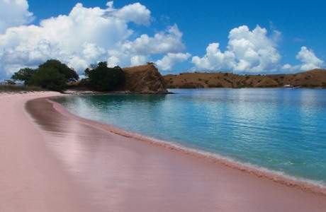 Beauty Pink Beach In Lombok Indonesia