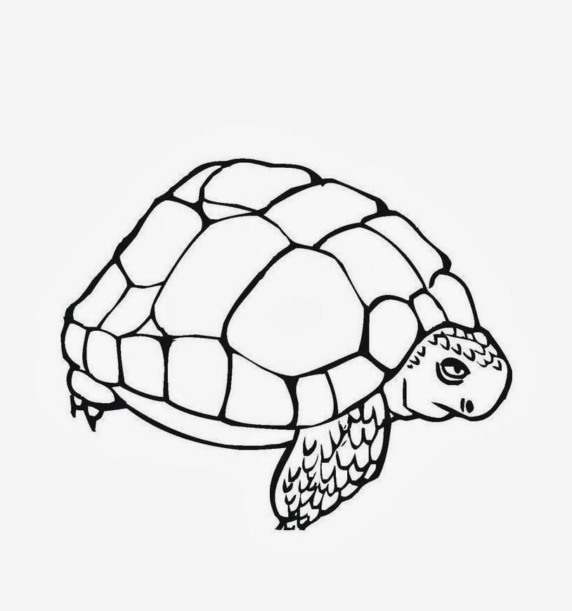 colours drawing wallpaper Turtle Cartoone Colour Drawing HD Wallpaper